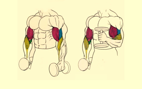 Три упражнения для мощного бицепса от вице-чемпиона СССР